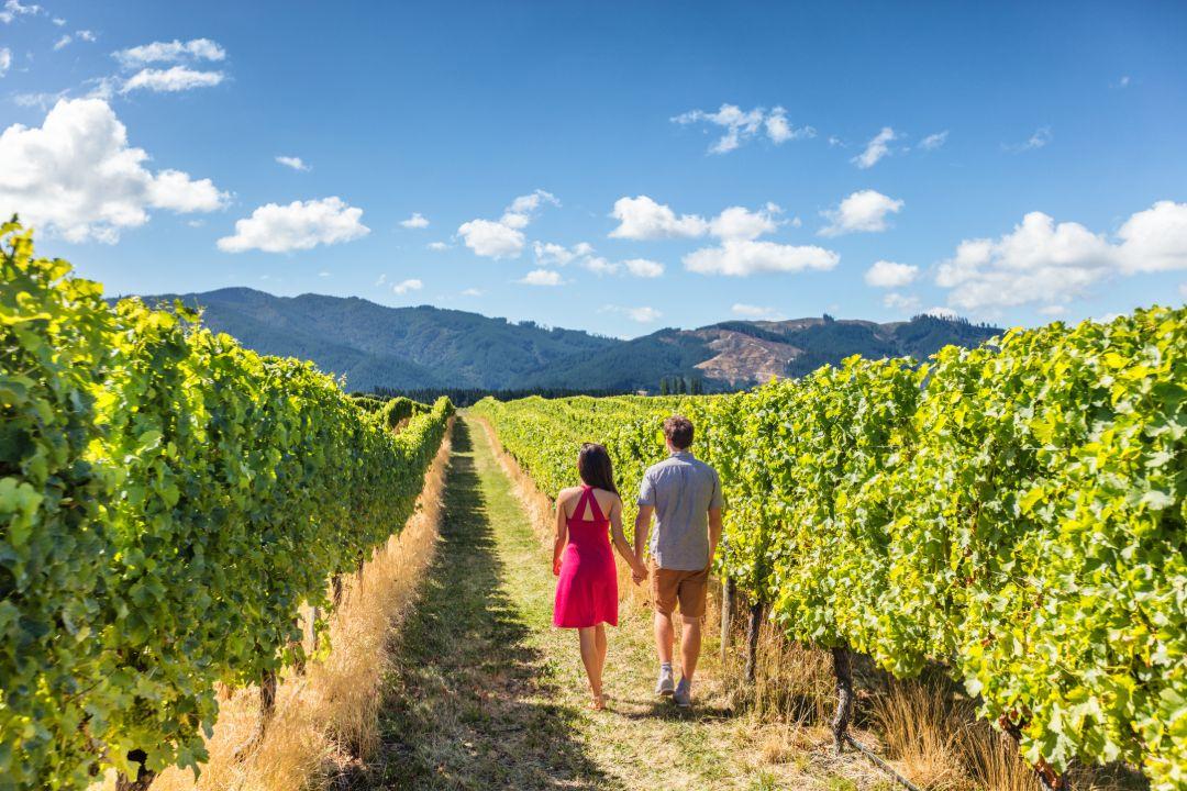 South Australia Wine Tours